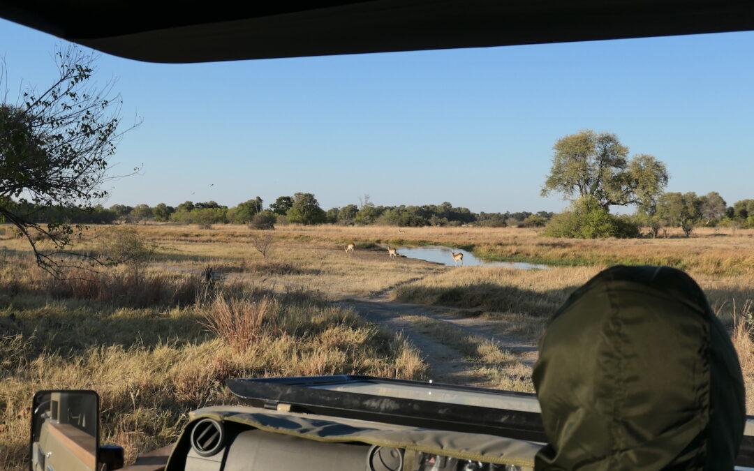On a Game Drive in Botswana: On Safari in Khwai