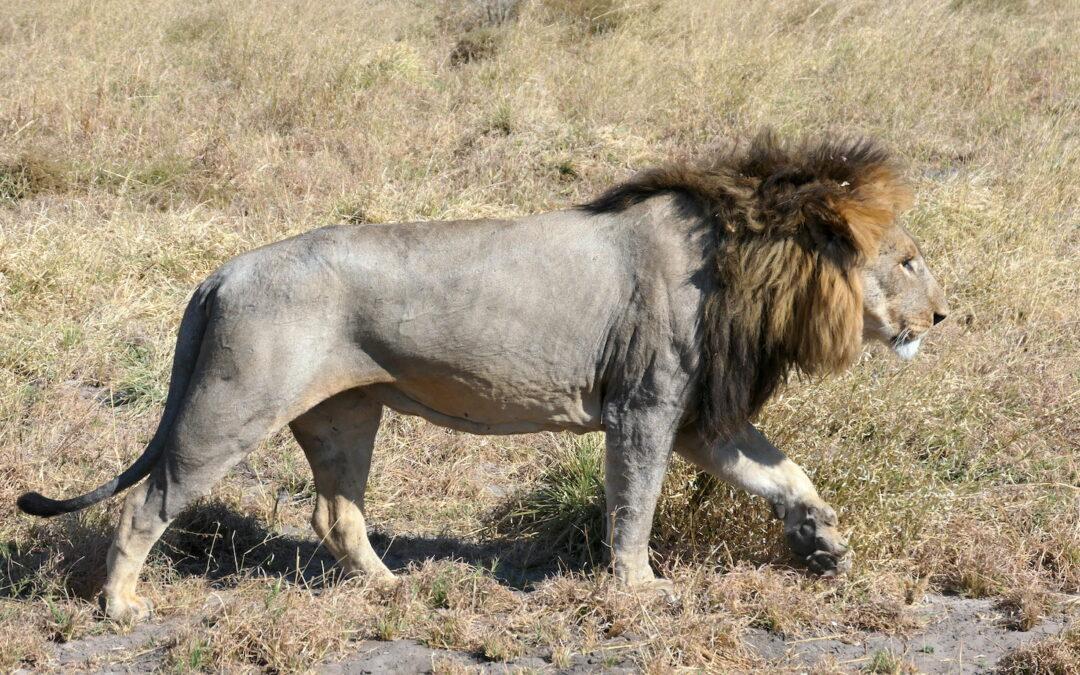 Animals of Botswana: What Are Africa's Big 5 on Safari?