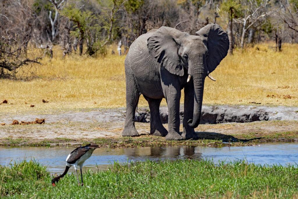 on safari in Botswana