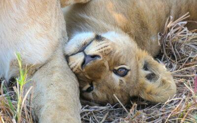 Go on a Botswana Family Safari with Kids