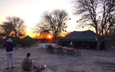 Mobile Safari vs. Safari Lodge: Which is Best?