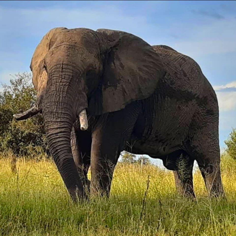 Elephant close up safari