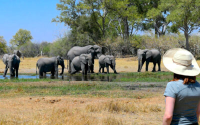 Botswana Safari Travel 2021: Latest News & Updates