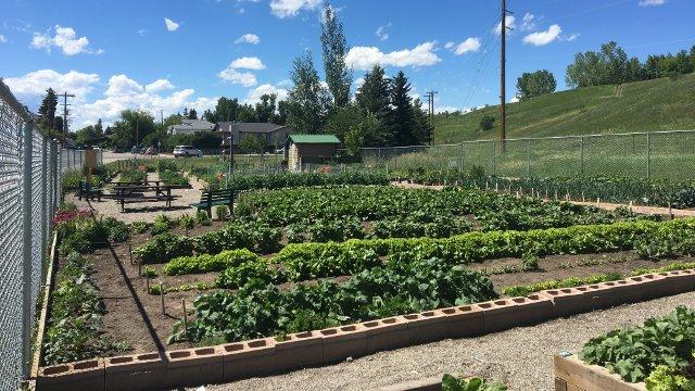 Community Garden - Okotoks