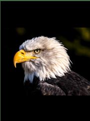 Bald Eagle seen on Kayak Adventure