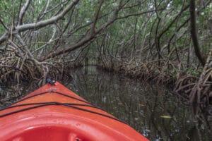 kayaking Weedon Island Nature Preserve