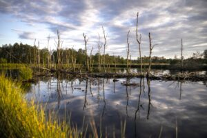 Why Florida Wetlands are Important to the Environment