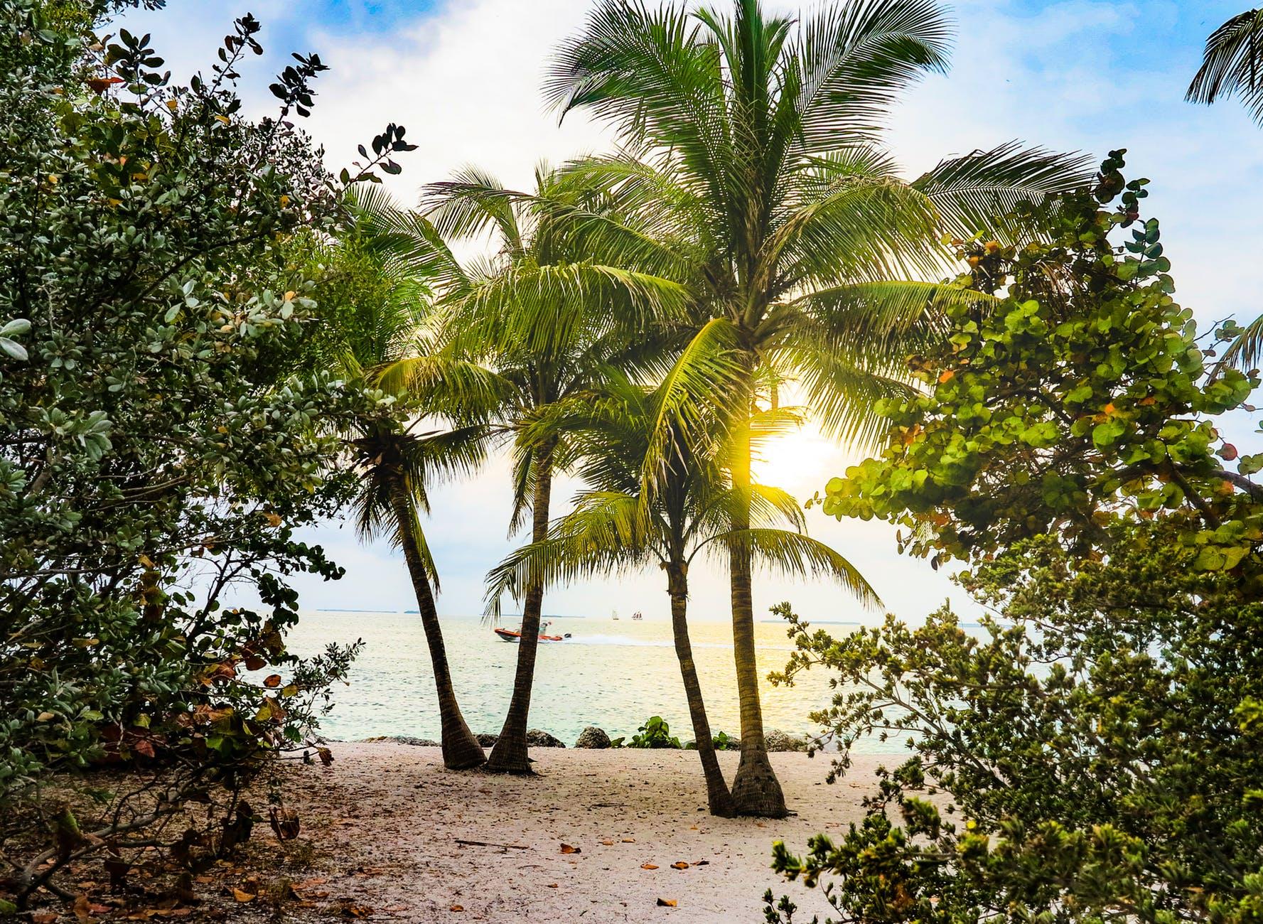 Florida conservation efforts