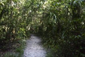 St. Pete beach path