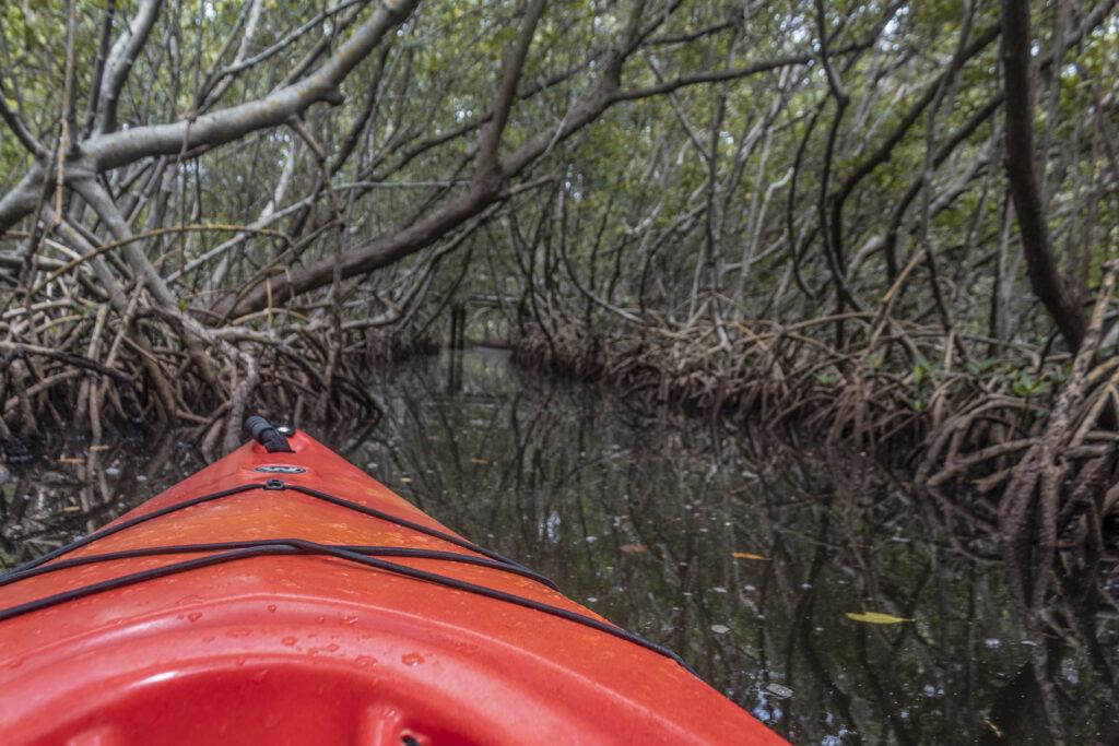 kayaking on weedon island preserve
