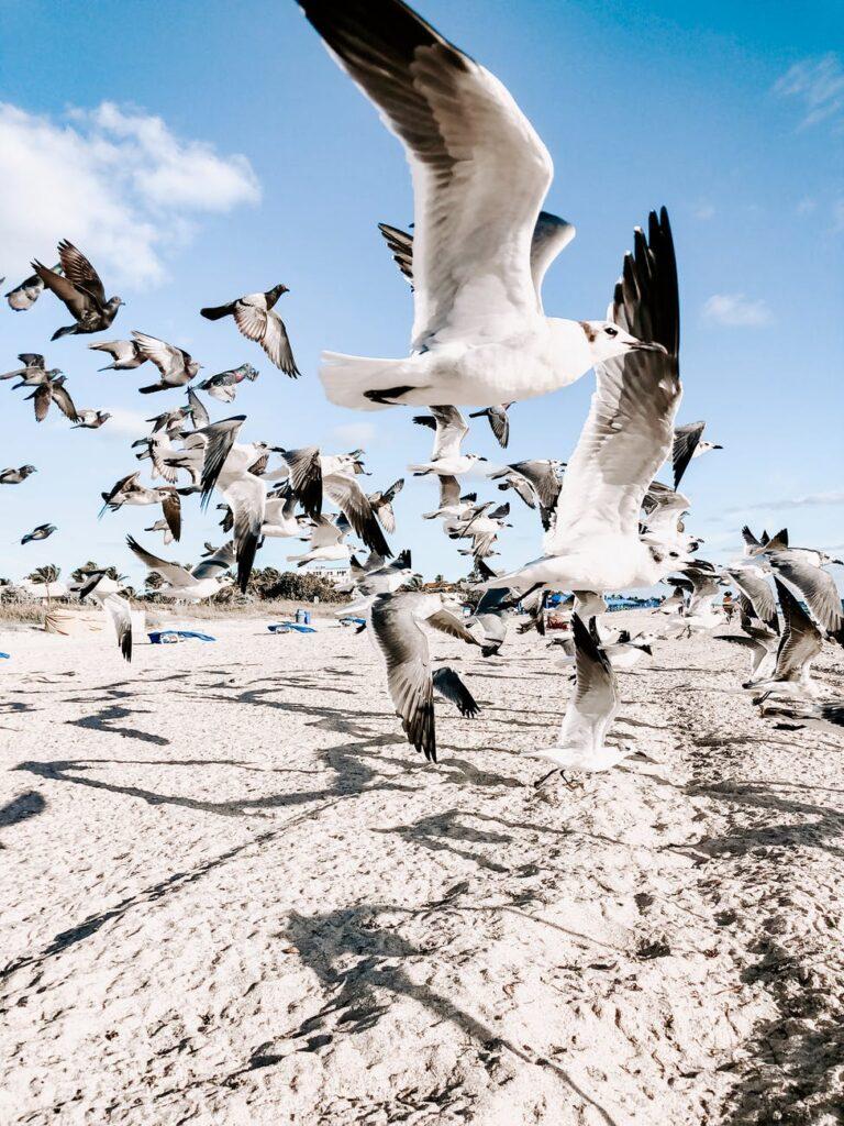 interesting Florida information- Florida wildlife