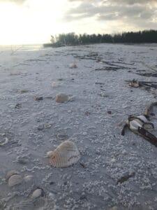Shells on St. Pete Beach