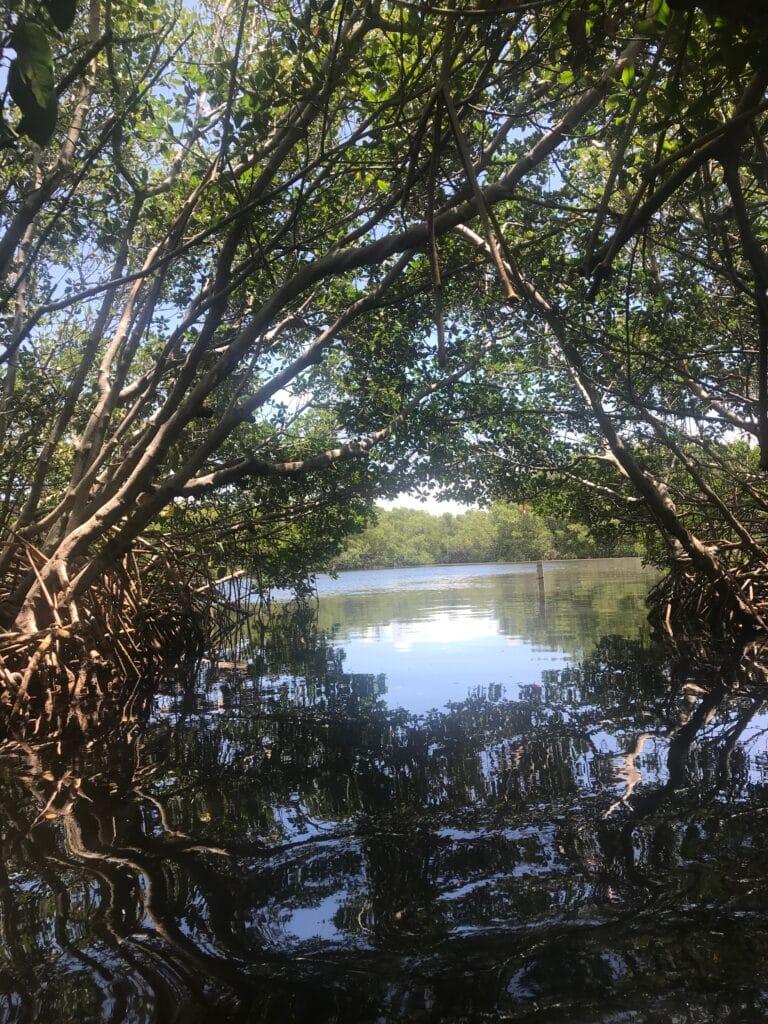 Wedon Island Nature Preserve