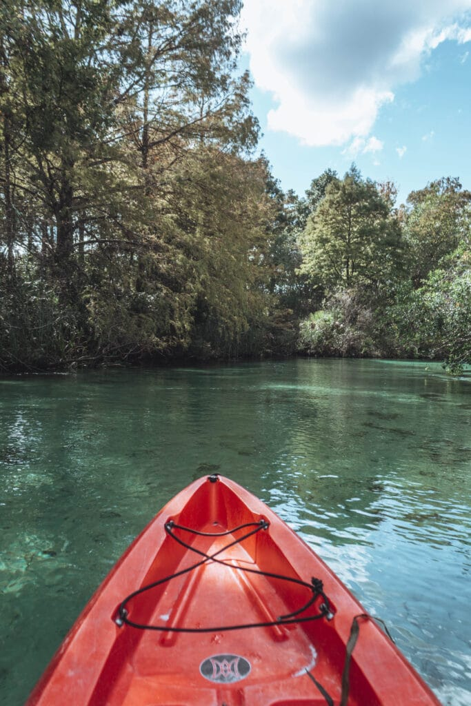 Fanning Spring State Park Manatees