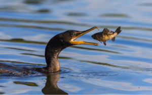 The Importance of Wildlife in Tampa Bay