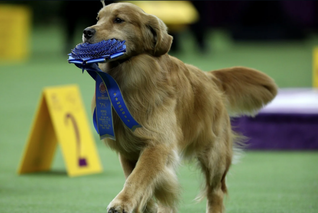 Weekly fave 5 Vogue, meet the 5 Chicest canniest from the westminster dog show