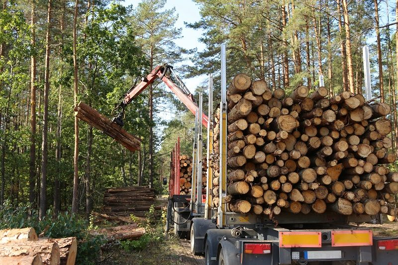 Timber-harvesting-and-transportation-in-forest.-cm