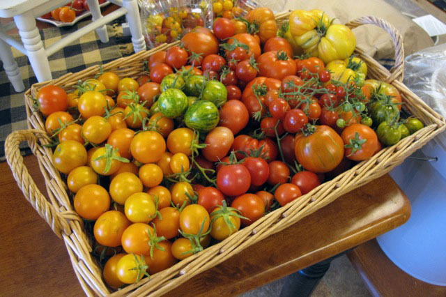 fresh_tomatoes