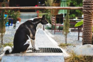 4 Body Language Signals To Help YOU Help Your Dog