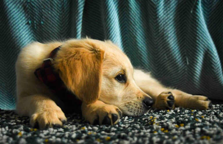 Spotting Separation Anxiety in Your Dog