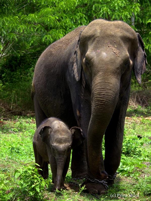 elephants in Nagarhole National park