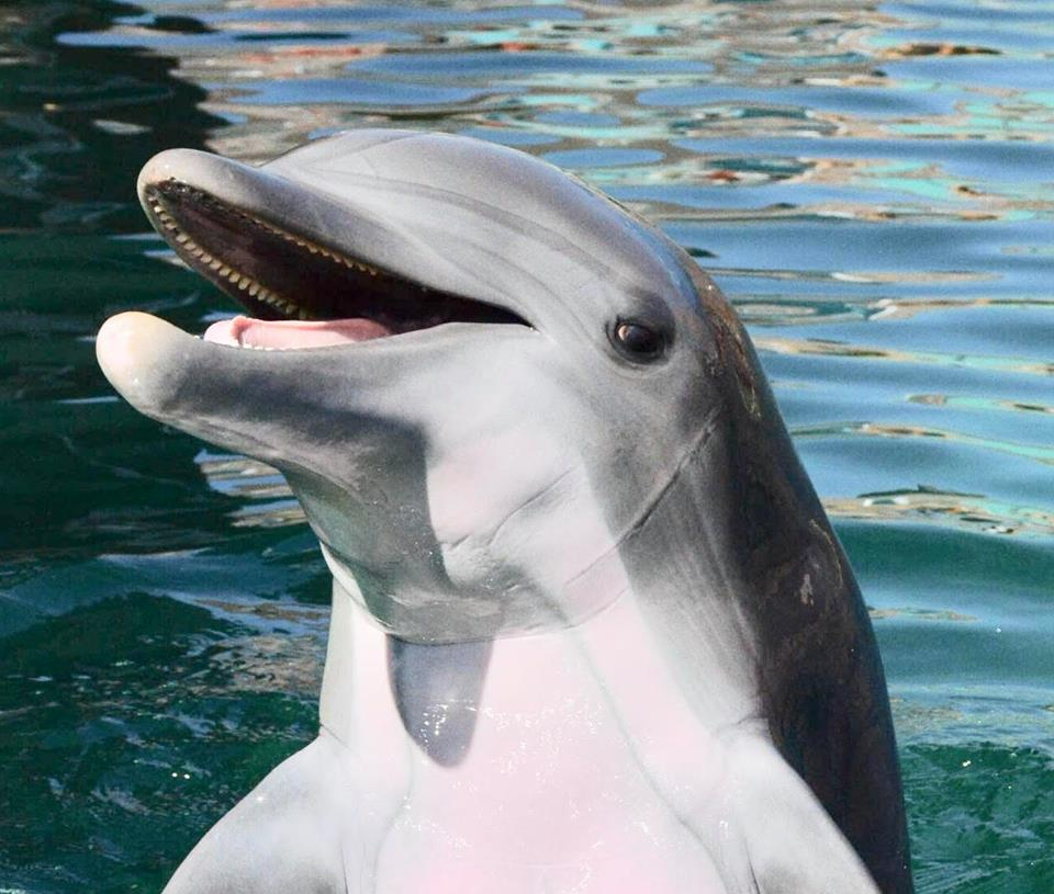 "Breaking News! Death of 10-Year-Old Dolphin ""Alia"""