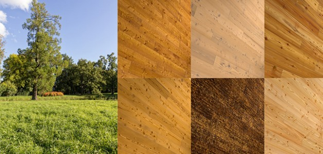 Featured Product: Larch