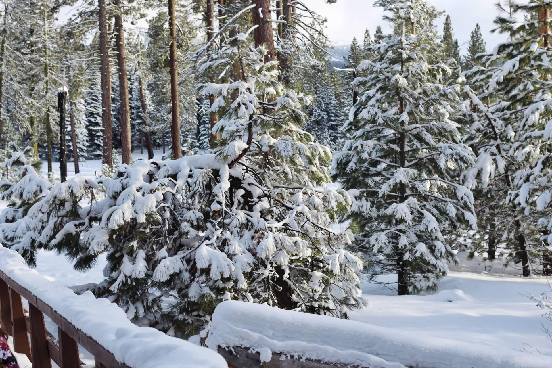 Snow lassen park