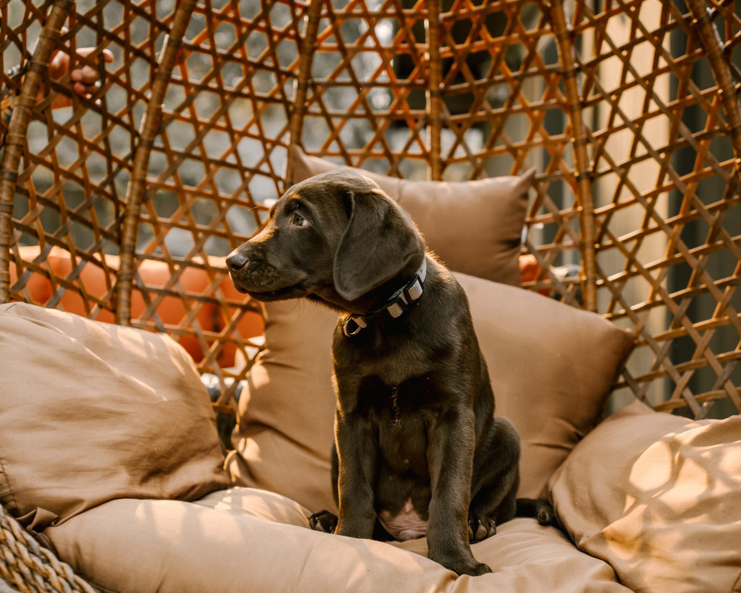 Ruthie Ridley Blog We Got A Puppy