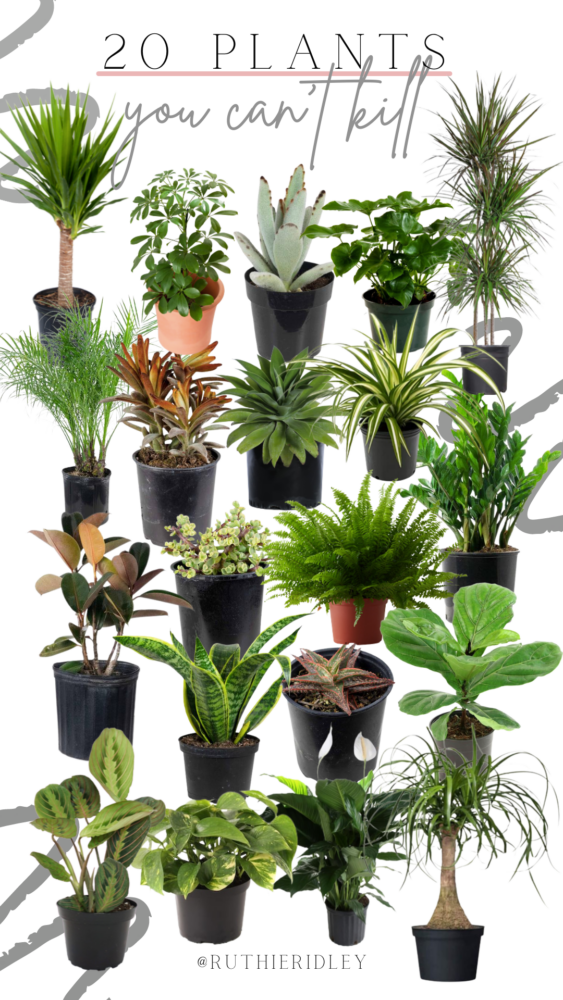 Ruthie Ridley Blog 20 Outdoor Plants You Can't Kill