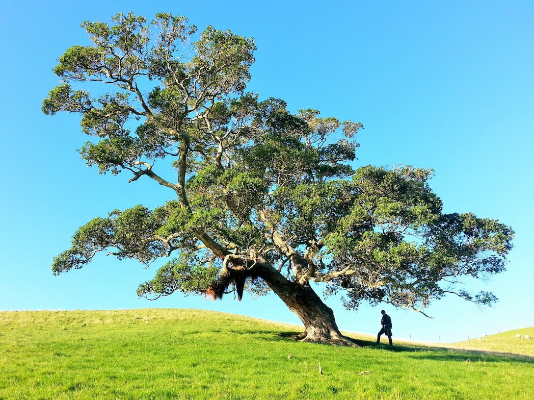 Kronversation: How to National Love a Tree Day