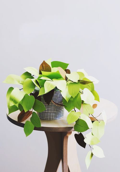 DIY Philodendron Heart Leaf