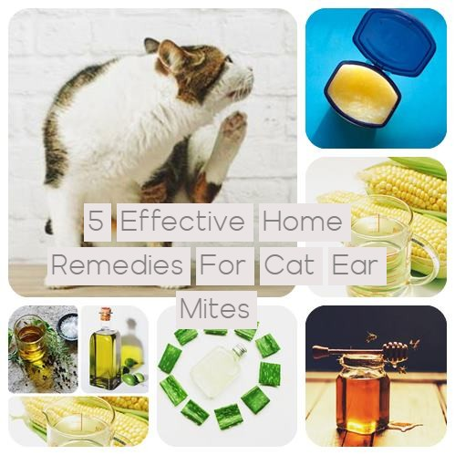 5 Effective Home Remedies For Cat Ear Mites