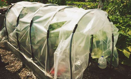 DIY Cloche Greenhouse