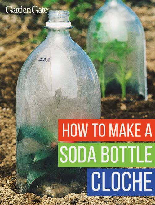 DIY Soda Bottle Cloche