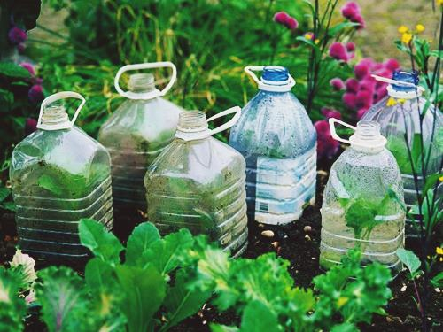 DIY Cloches and Cold Frames