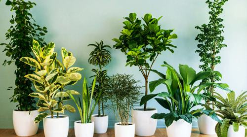 DIY To Increase Humidity Naturally by house plants