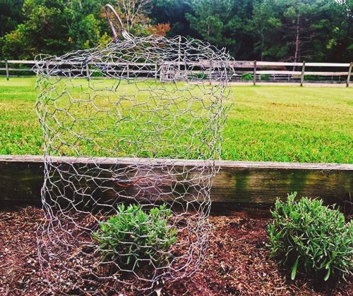 DIY Chicken Wire Cloche