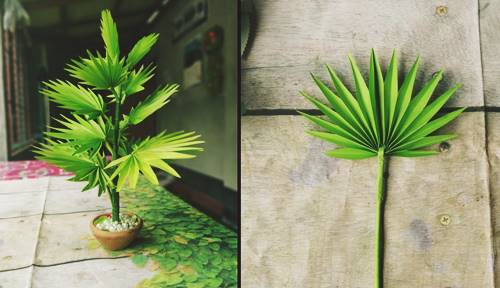 Palm Tree For Pot