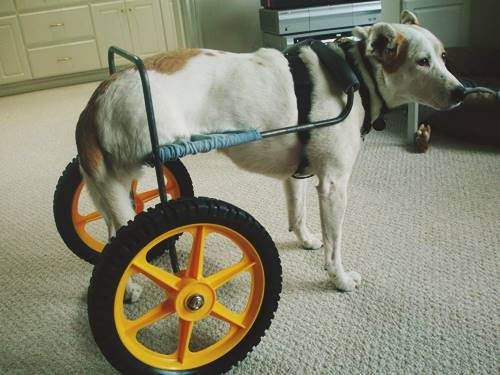 Alloy Tubing Dog Wheelchair