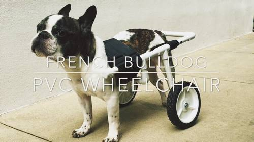 DIY Bulldog PVC Dog Wheelchair