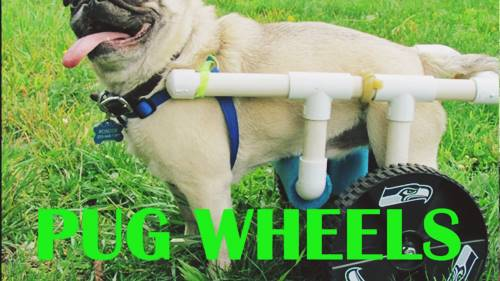 DIY Pug Wheelchair