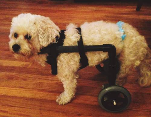 DIY Wheelchair for Puppies