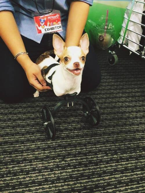 Small Front Leg Dog Wheelchairs
