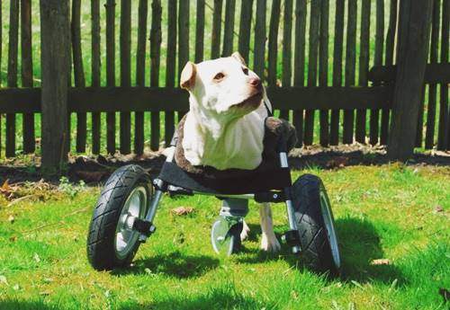 DIY Wheelchair for Handicapped Dogs