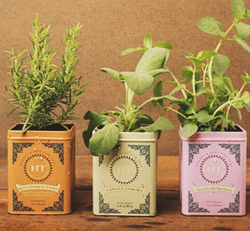 Herb Planter For Mother's Day