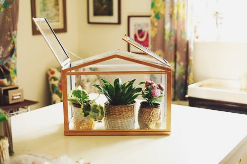 Making Small Indoor Greenhouse