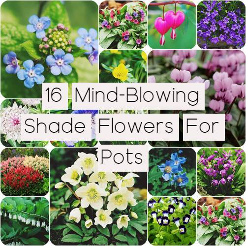 16 Mind-Blowing Shade Flowers For Pots | Beautify your garden
