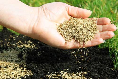 Tips before growing grass