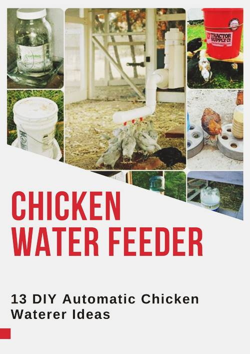 Chicken Water Feeder
